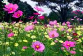 鶴山台西公園