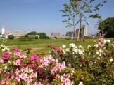 大和川河川公園