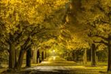 都立光が丘公園