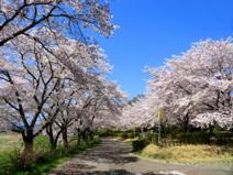 野田河川公園