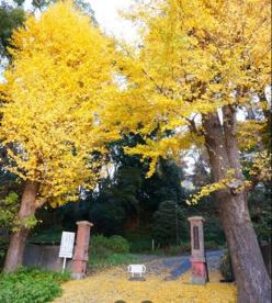 千葉大学 松戸キャンパスの画像1