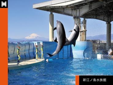 新江ノ島水族館の画像1