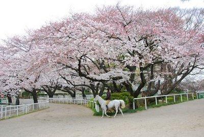 馬事公苑の画像2
