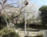 荏原西公園