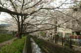 二カ領用水 桜