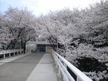 日新高等学校