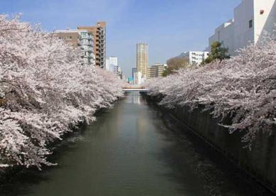 目黒川の画像1