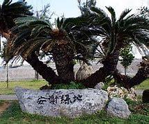 安謝緑地の画像1