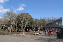 調布白菊幼稚園