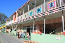 染地幼稚園