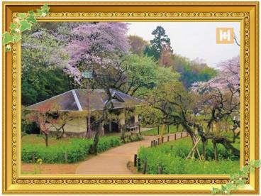 大倉山公園の画像1
