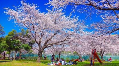東白鬚公園の画像1
