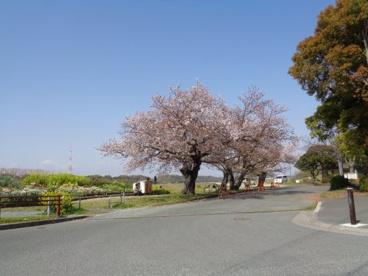 佐鳴湖公園の画像1