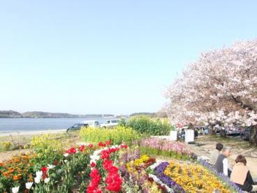 佐鳴湖公園の画像3