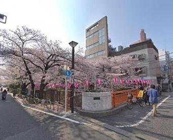 目黒川(桜並木)の画像1