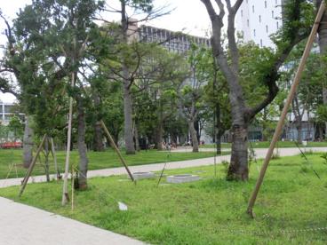 中野四季の森公園の画像2