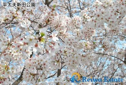 平太夫新田公園の画像4