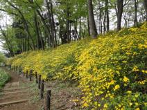 安行原自然の森