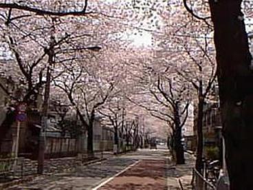 目黒区立田向公園の画像1