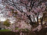麻生北公園
