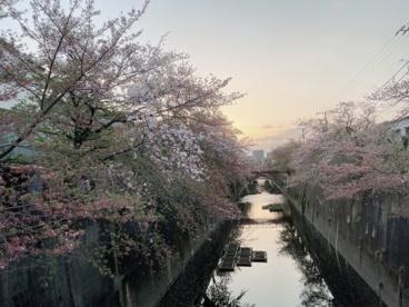 石神井川の画像1