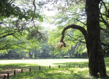 目黒区立駒場公園の画像1