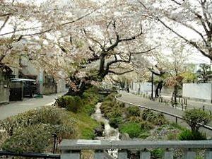 北沢川緑道の画像1
