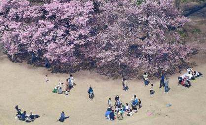 新宿御苑の画像4