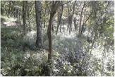 仁戸名市民の森
