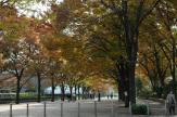 代々木公園 ケヤキ並木