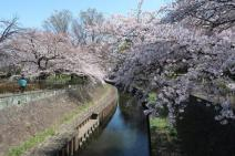 善福寺川緑地