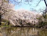 東京都立善福寺公園