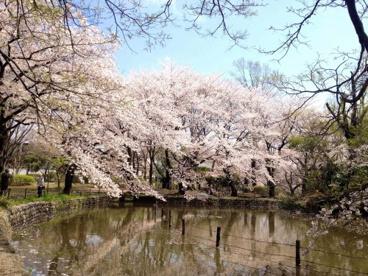 東京都立善福寺公園の画像1