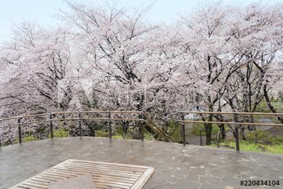 東京都立戸山公園の画像2