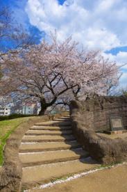 大森貝塚遺跡庭園の画像4