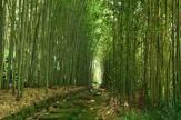 京都市洛西竹林公園