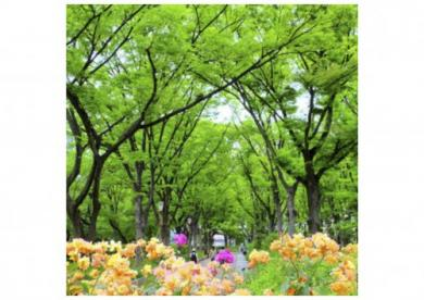 靱公園の画像1