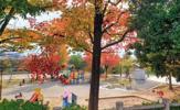 姥子山中央公園