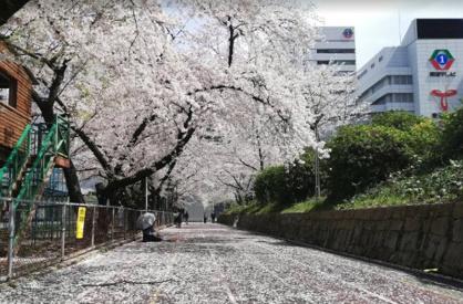 第2号栄公園の画像1