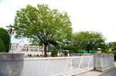 柏市立松葉第一小学校
