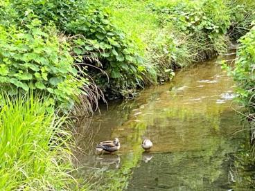 和泉川緑のウォークの画像3