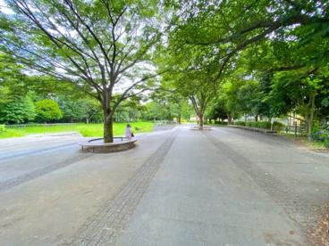 和泉川緑のウォークの画像5