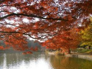 大宮第二公園の画像1