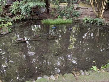 狛江弁財天池緑地の画像2