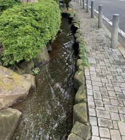 西野川せせらぎの画像1