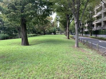 野川緑地広場の画像1