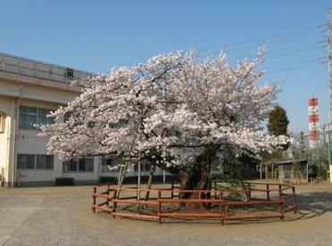 八王子市立第八小学校の画像1
