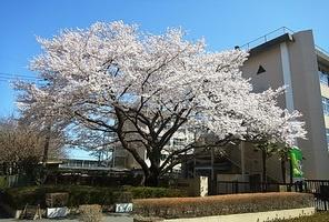 八王子市立東浅川小学校の画像1