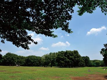 代々木公園の画像2
