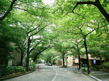 アークヒルズ周辺の並木道の画像1